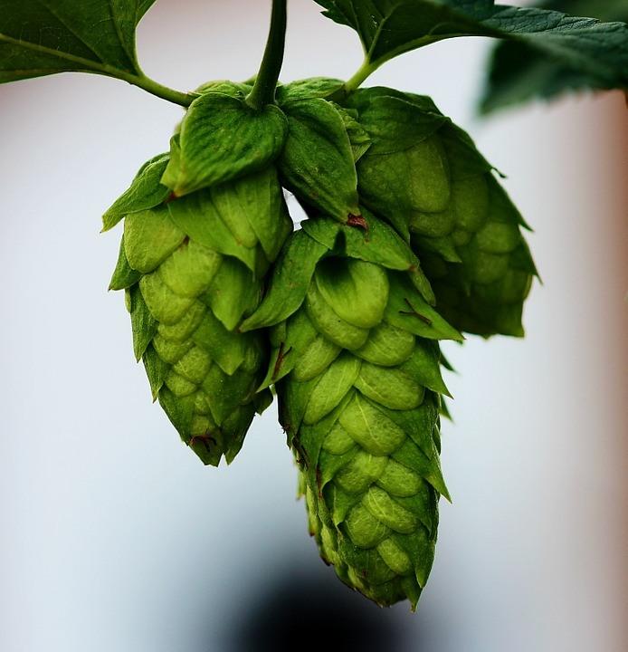 Los IBUs, el (no) indicador del amargor de la cerveza